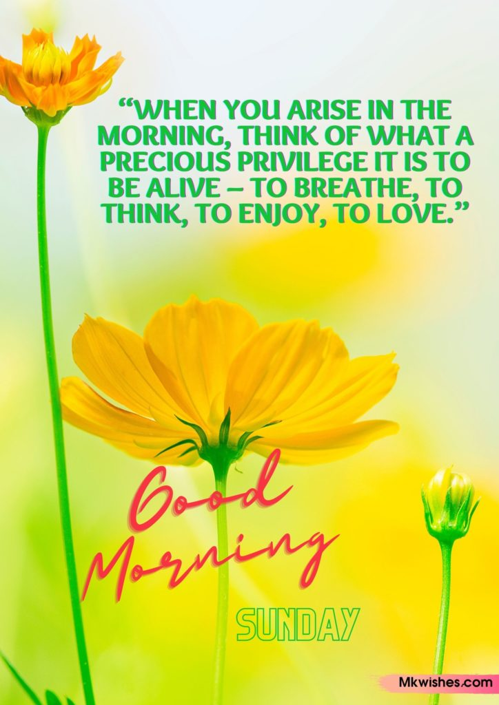 Good Morning Sunday Flowers images with quotes