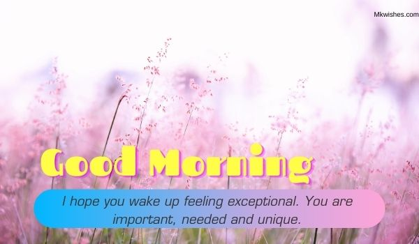 Good Morning Beautiful flowers Images with quotes