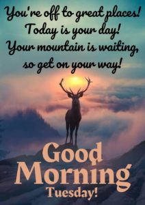 Good Morning Tuesday HD Images