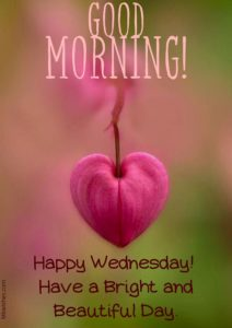 Good Morning Wednesday Quotes Images