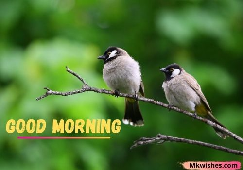Download Good Morning birds images