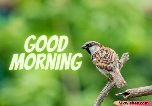 Beautiful good morning with birds