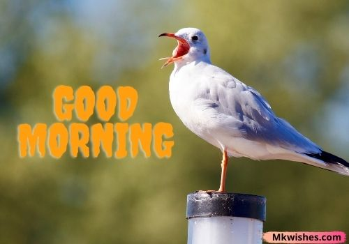 Good Morning birds images for Fb