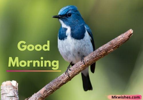 Beautiful Good Morning birds photos
