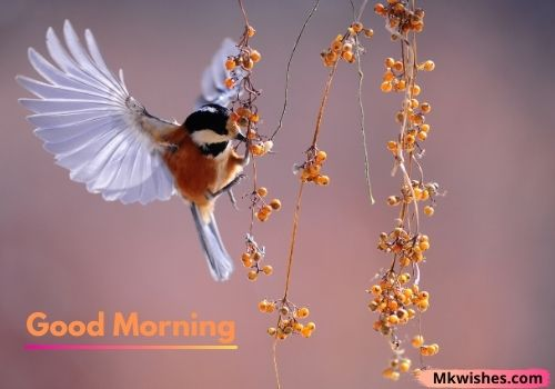 Birds images for Good Morning