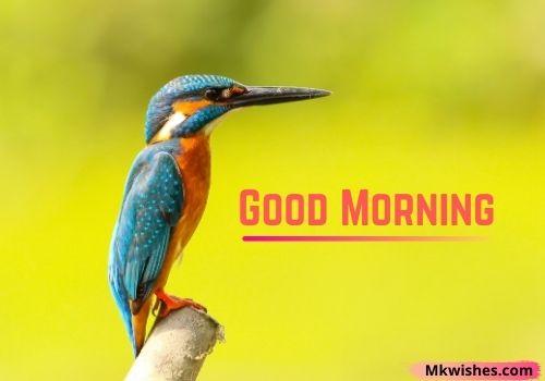 Amazing Good Morning birds images