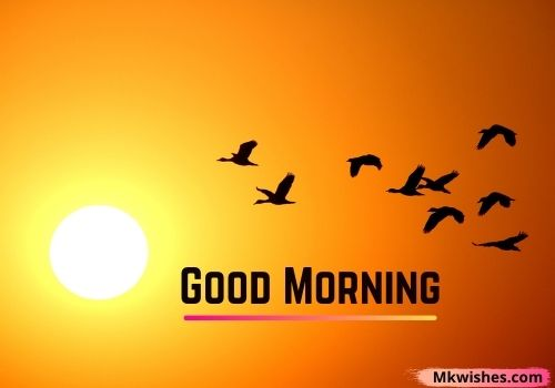 Amazing Good Morning birds images for free downloads