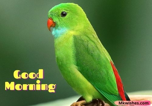 Best good morning images with birds