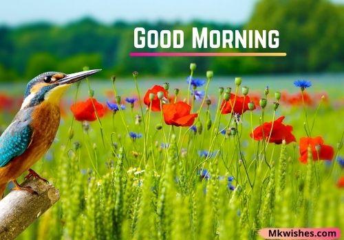 Good Morning birds photos for fb status