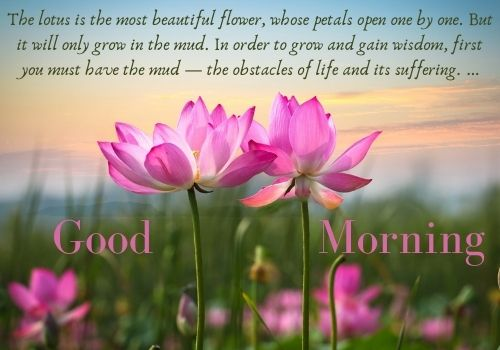 Good Morning Flower HD Images