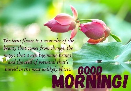Good Morning Quotes HD Images