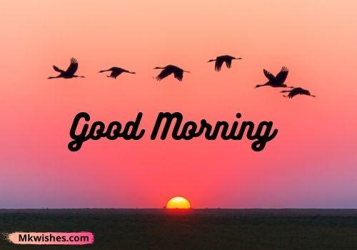 Best Good Morning birds images for Fb