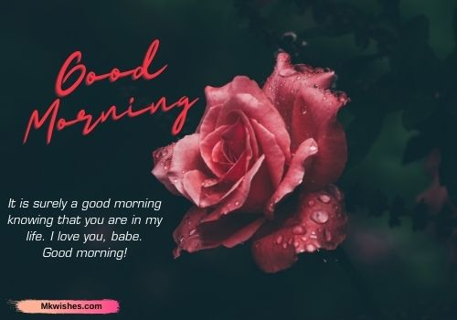 Good morning rose images with quotes for Wife / GF
