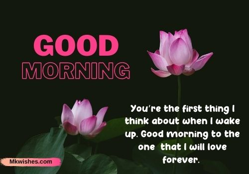 Download Good Morning Lotus images with quotes