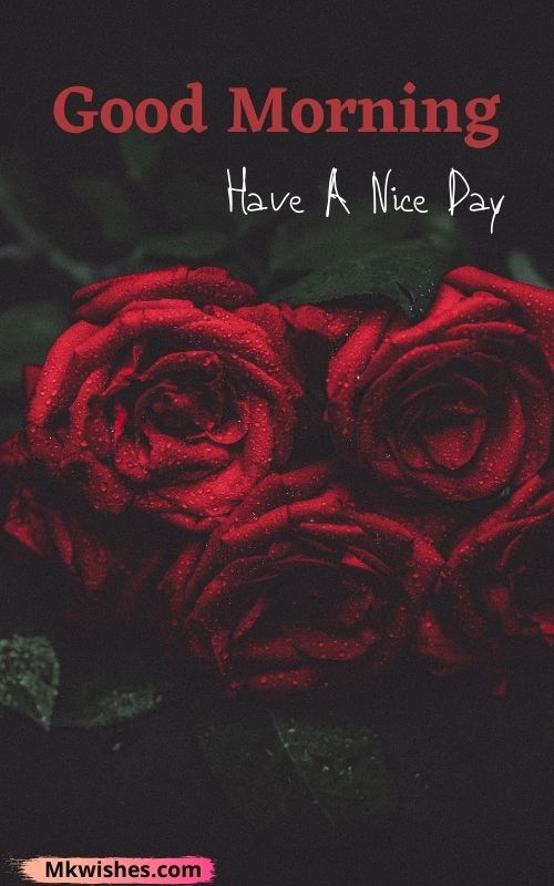 Download good morning have a nice day with rose