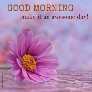 Good Morning Flowers Images