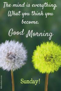 Good Morning Sunday Inspirational Photos