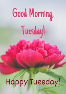 Good Morning Happy Tuesday Images