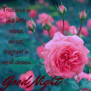 Rose Good Night Images