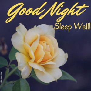 Good Night Rose Images