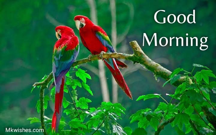good morning love birds parrot images