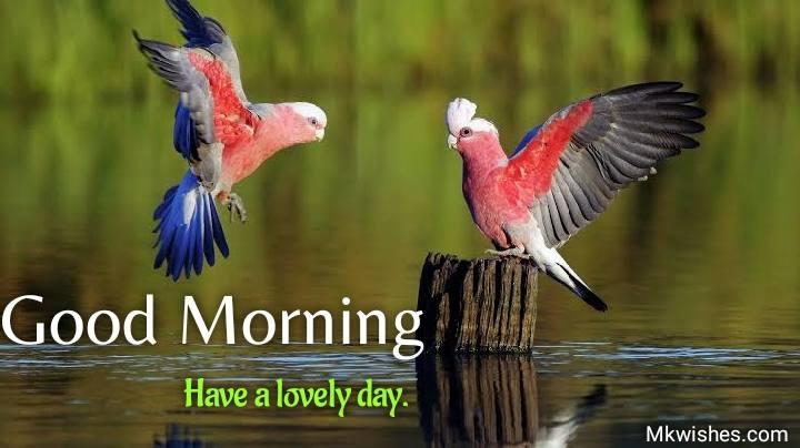 Good Morning flying birds images