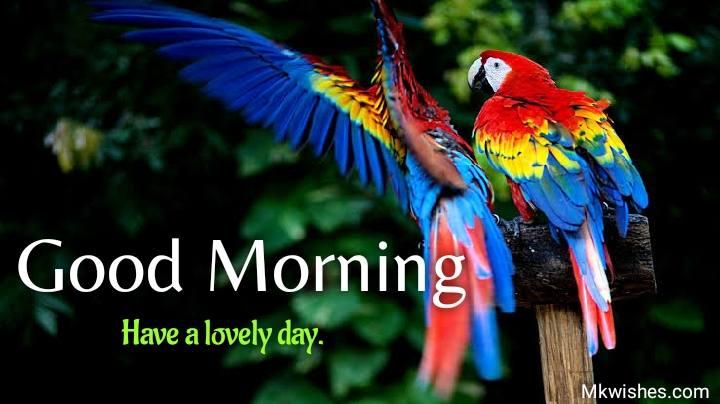 Beautiful good morning parrot images