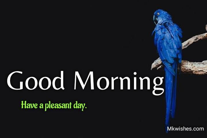 good morning birds images free download