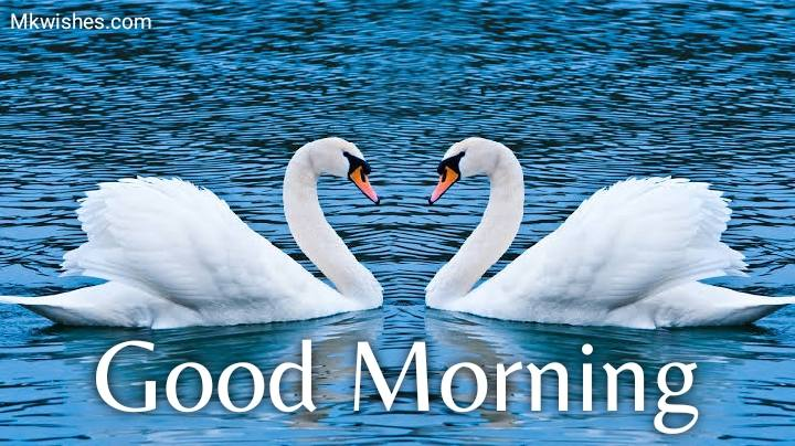 good morning images with love birds