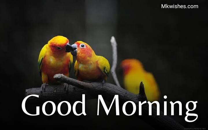 Good Morning love birds