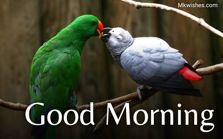 latest good morning images with love birds