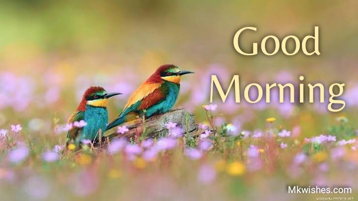 good morning images with flowers and birds