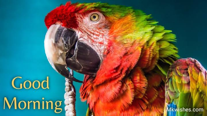 Good Morning parrot images