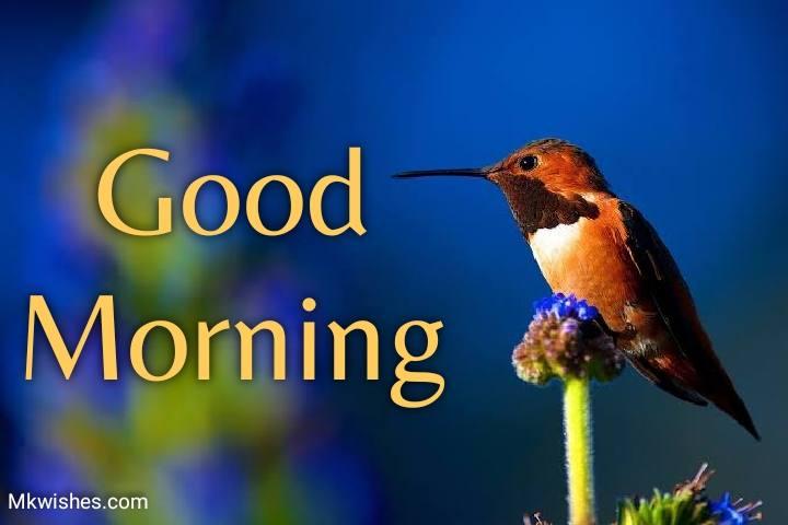 Best Good Morning Birds Images