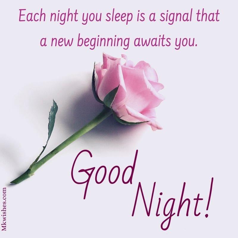 Good Night Flowers Photos