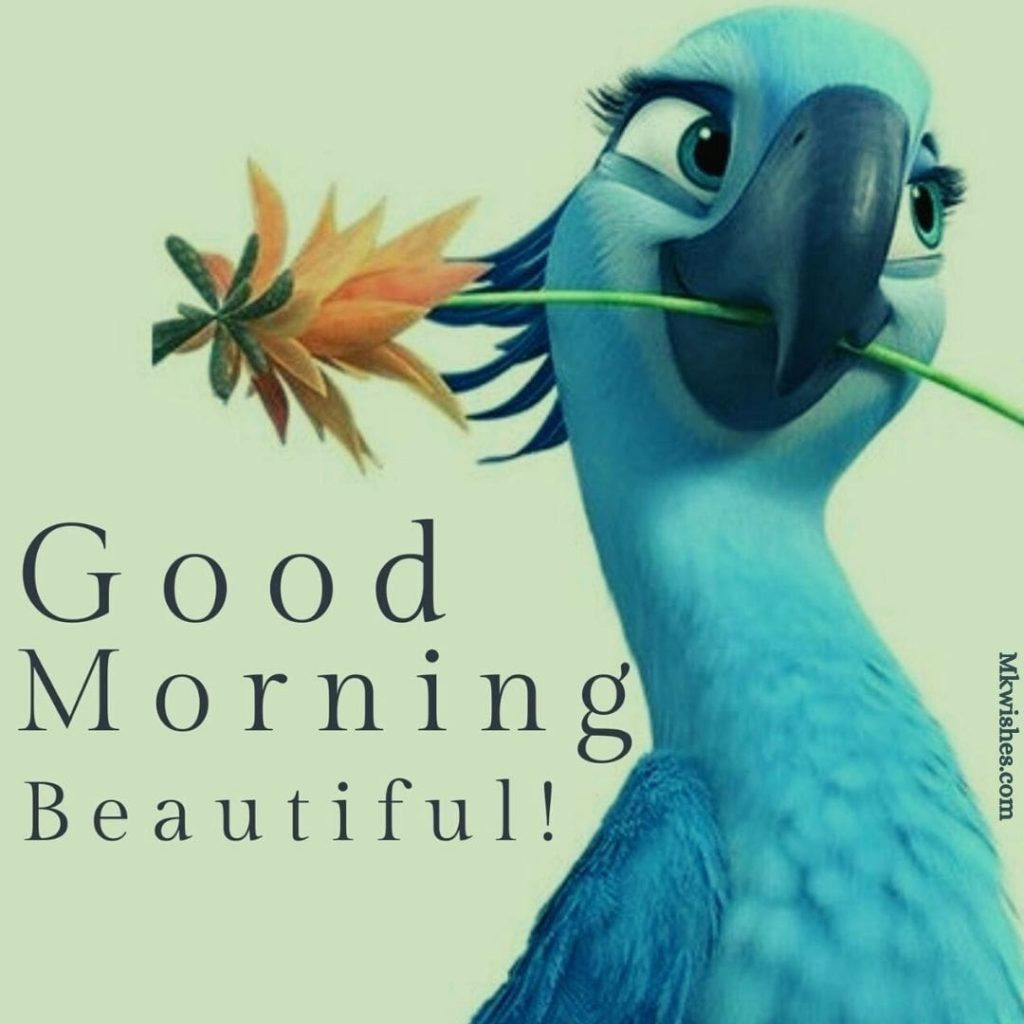 Good Morning Beautiful Pics