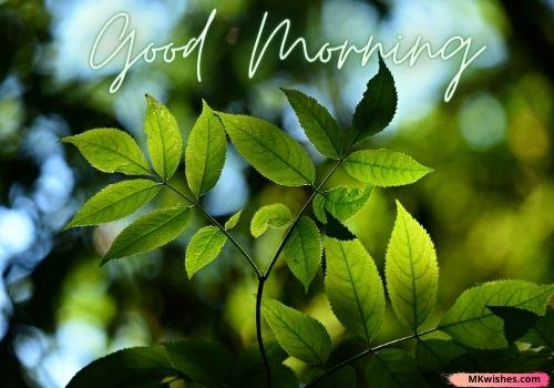 Good Morning nature photos
