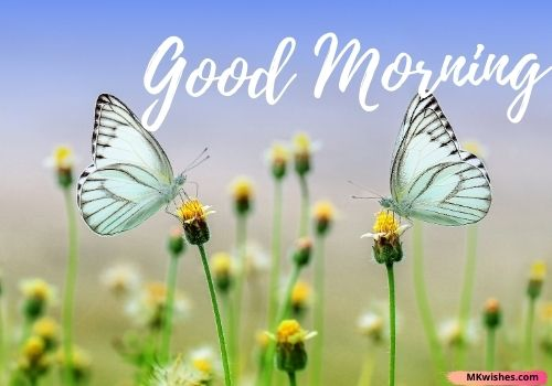 Best Good Morning nature photos