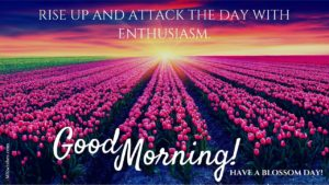 Good Morning wishes flowers images