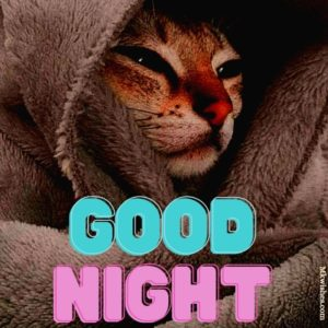 Good Night Greeting Pictures