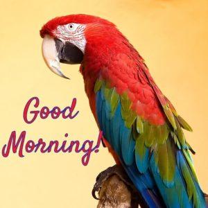 Good Morning Birds Status