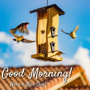 Good Morning Birds Photos