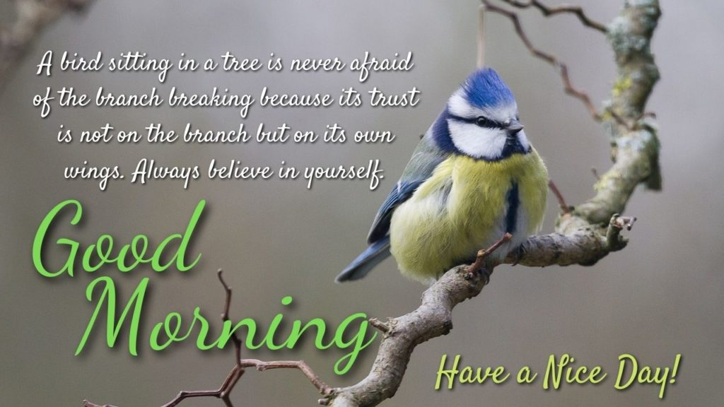 Inspirational Morning Birds Quotes Images
