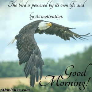 Good Morning Wishes Messages with Birds