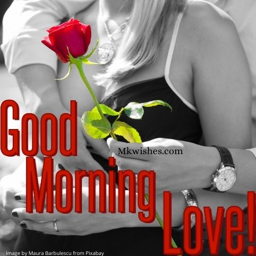 Good Morning Love Rose Pics