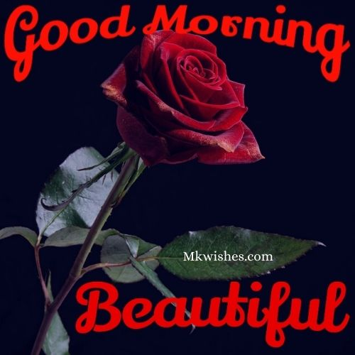Good Morning Rose Pics